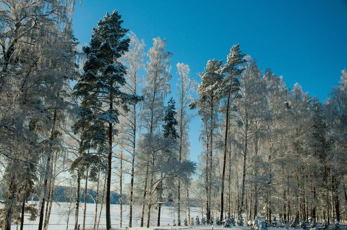 мороз и солнце - Вадим Гай