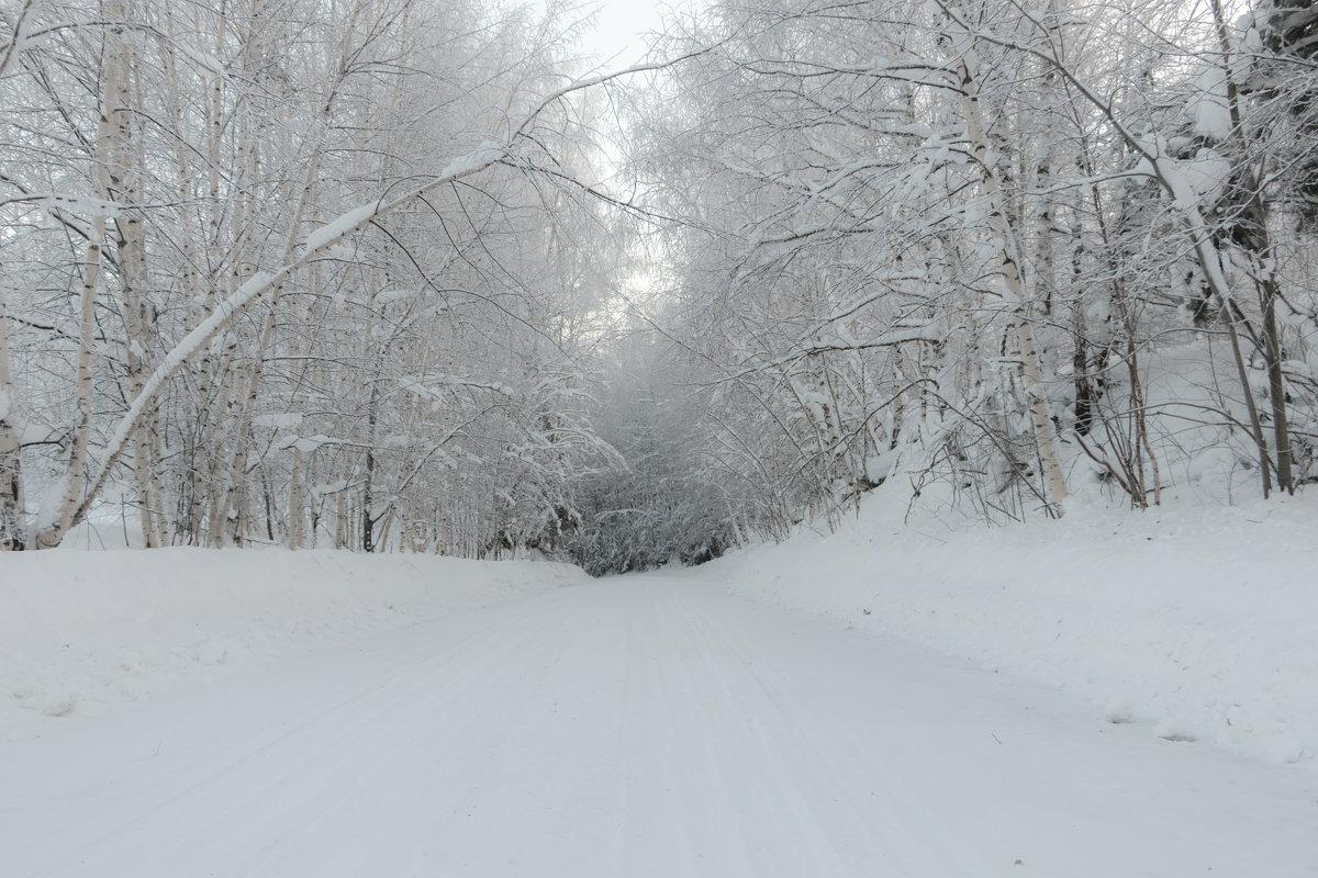 Снежная дорога - Светлана
