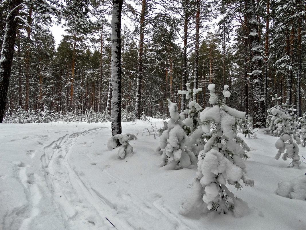 Следы на снегу - Виктор Четошников