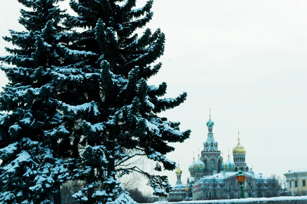 Собор - Владимир