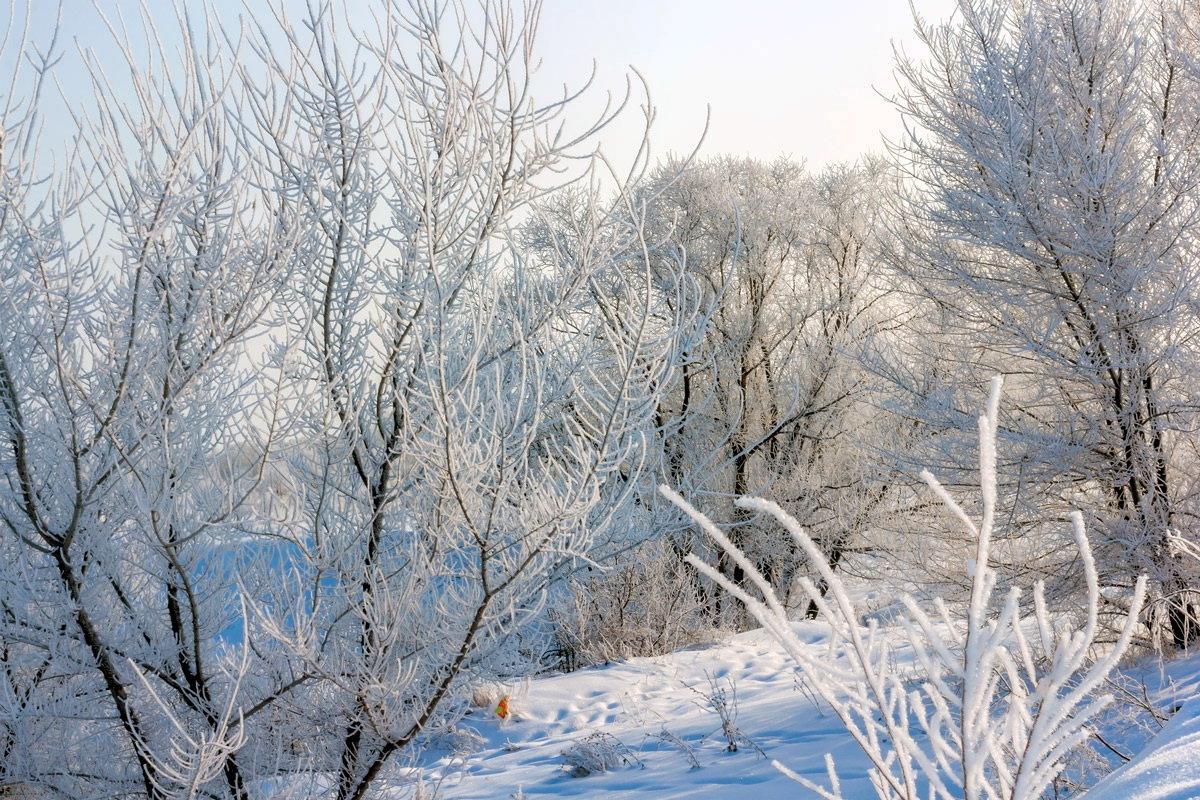 Зимняя красота - Юрий Стародубцев