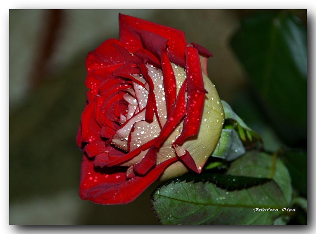 Как хороши, как свежи были розы... - Ольга Голубева