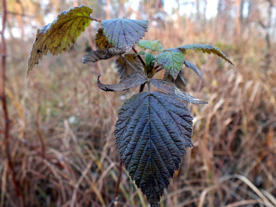 после заморозка листья почернели...... - Александр Прокудин