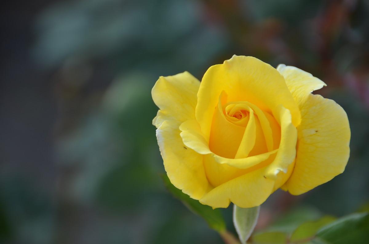 роза - Nina Delgado