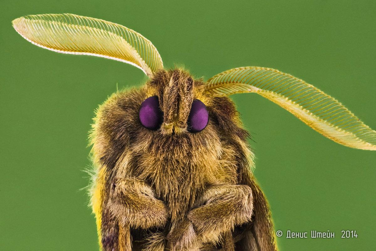Портрет ночного мотылька - Денис Штейн