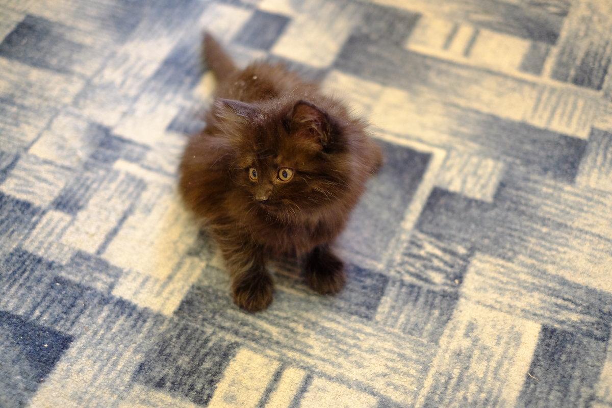 Котёнок Сонька - Сергей Ткаченко