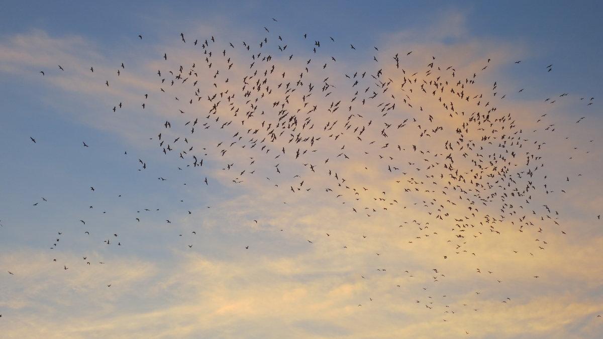 Чайки над морем - valeriy khlopunov