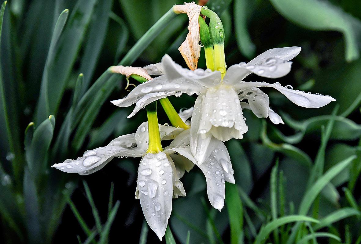 Весенний дождь 5 - Galina