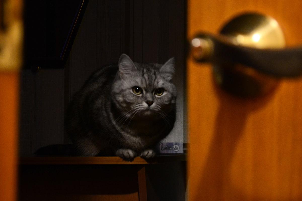 Задумчивый кот - Роман Васенин