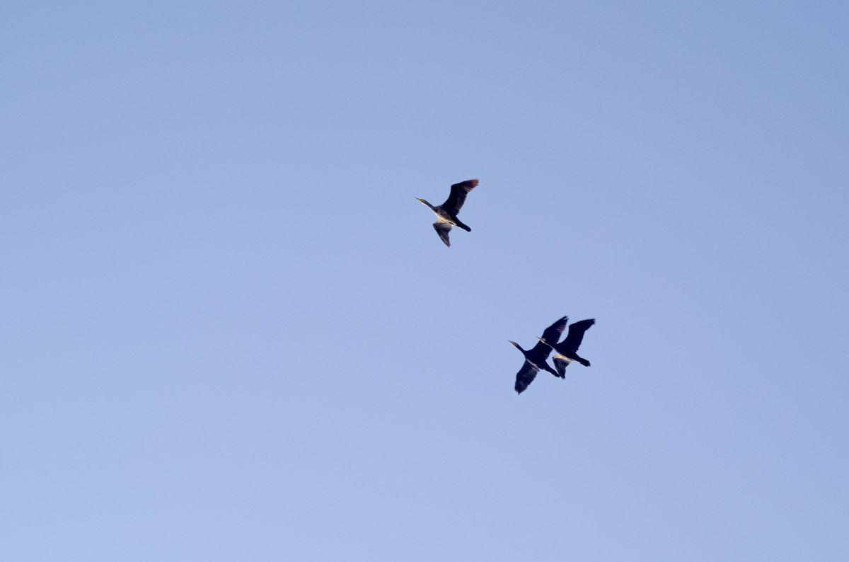 Летят перелетные птицы - Александр Деревяшкин