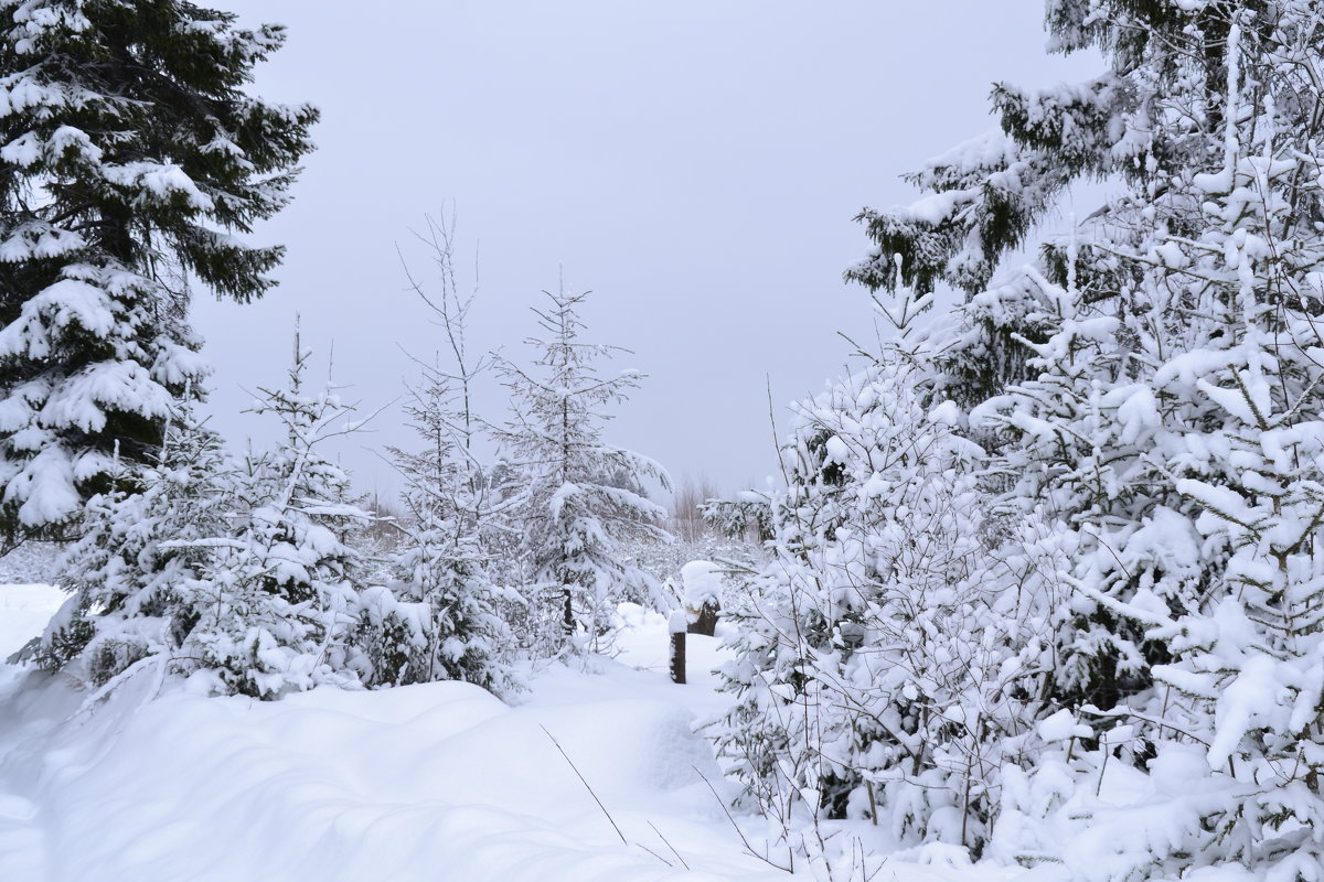 зимой на опушке - petyxov петухов