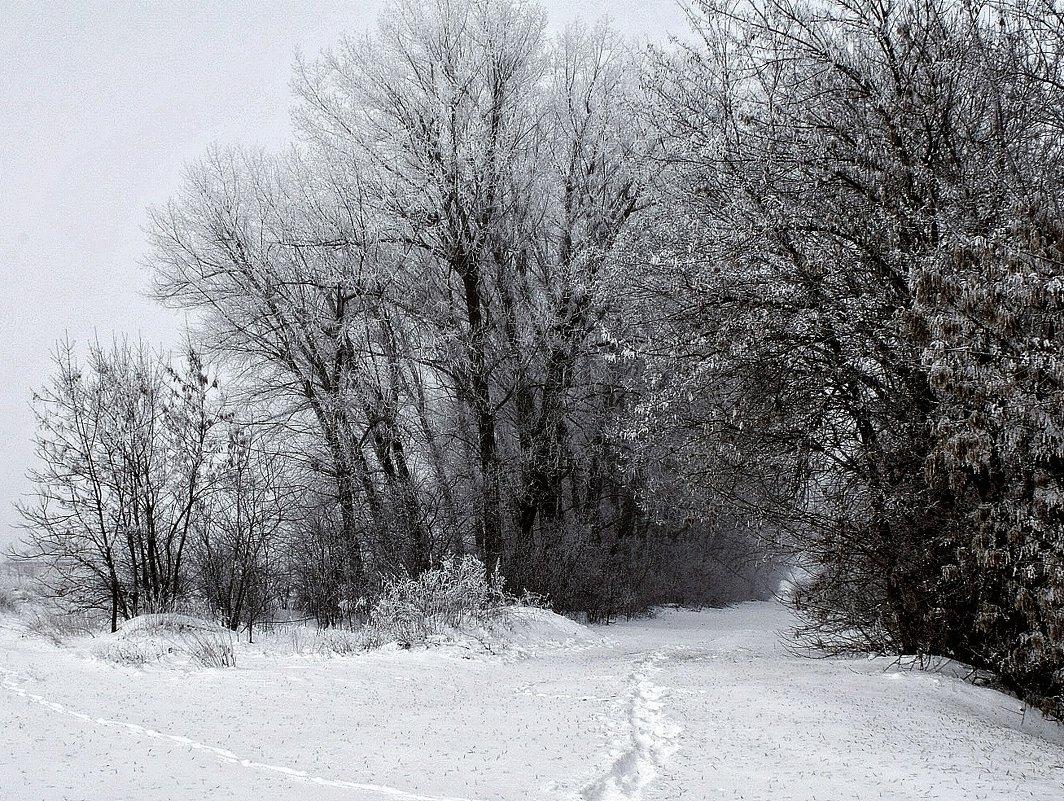 Графика Зимы. - владимир