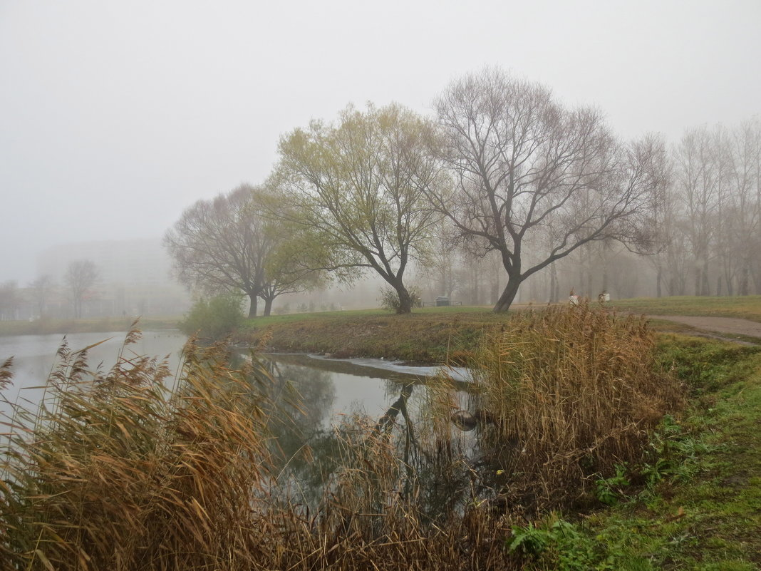 осенний туман - Елена