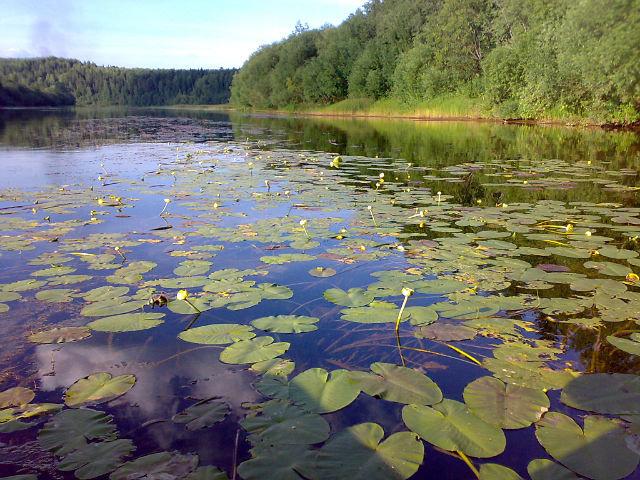 пермский край река кадь рыбалка