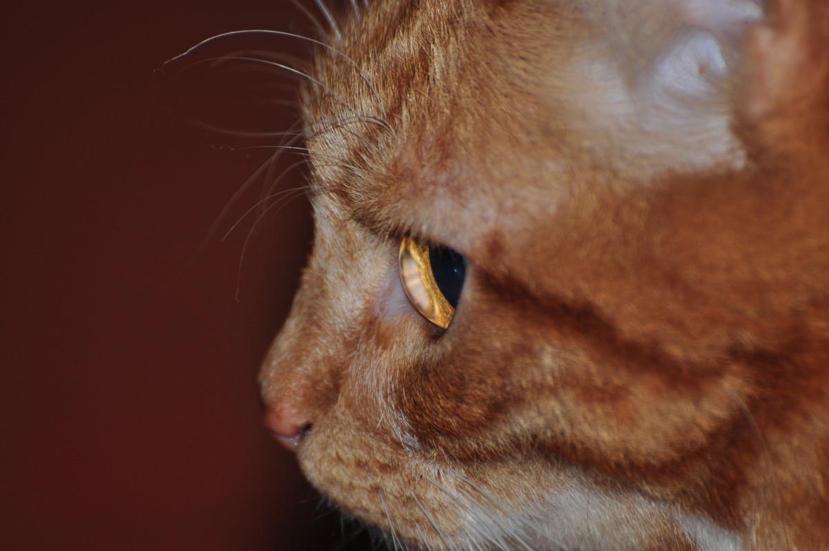 *Мой кот Кокос!!! - Виталий Виницкий