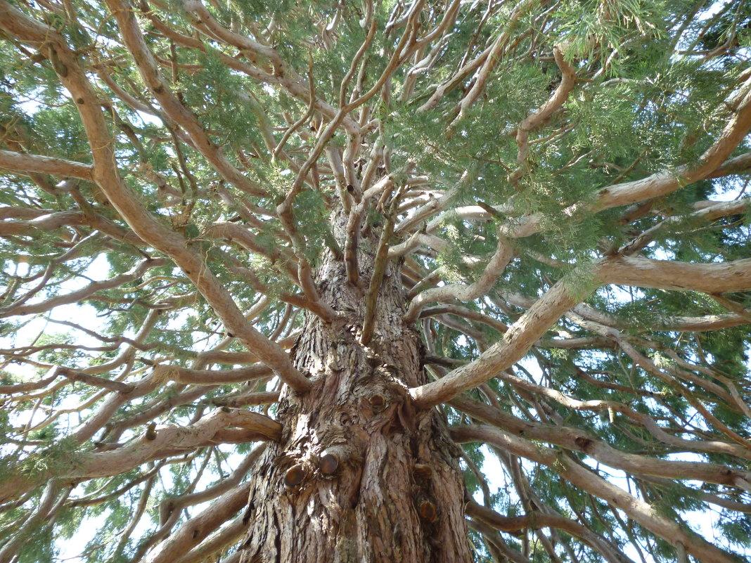 Чудо-дерево - Дарья Fox