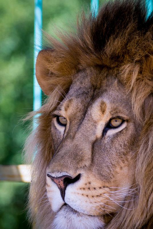 Зоопарк - Геннадий