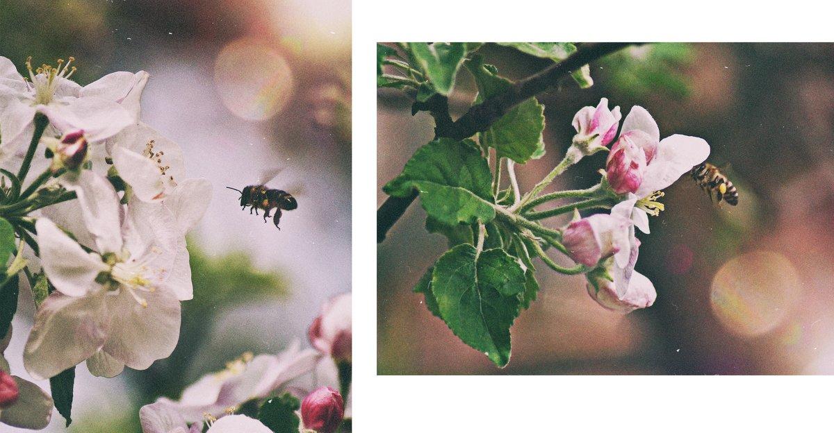 Делает яблоки - Оксана #