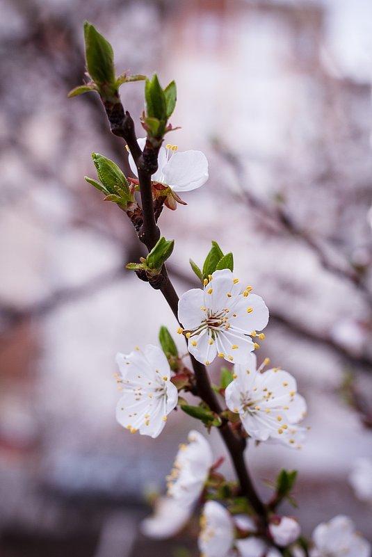 Весна пришла!!! - Сергей Афанасьев