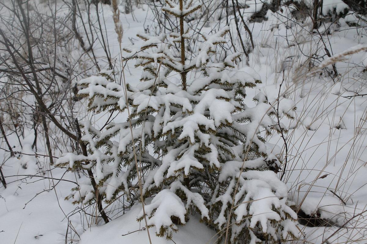 январь 2016 - Светлана