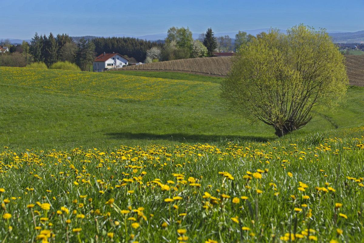 Весенне-утренние окрестности - Walter