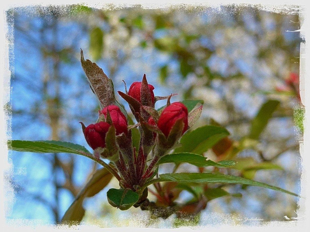 Цветы яблони - Nina Yudicheva