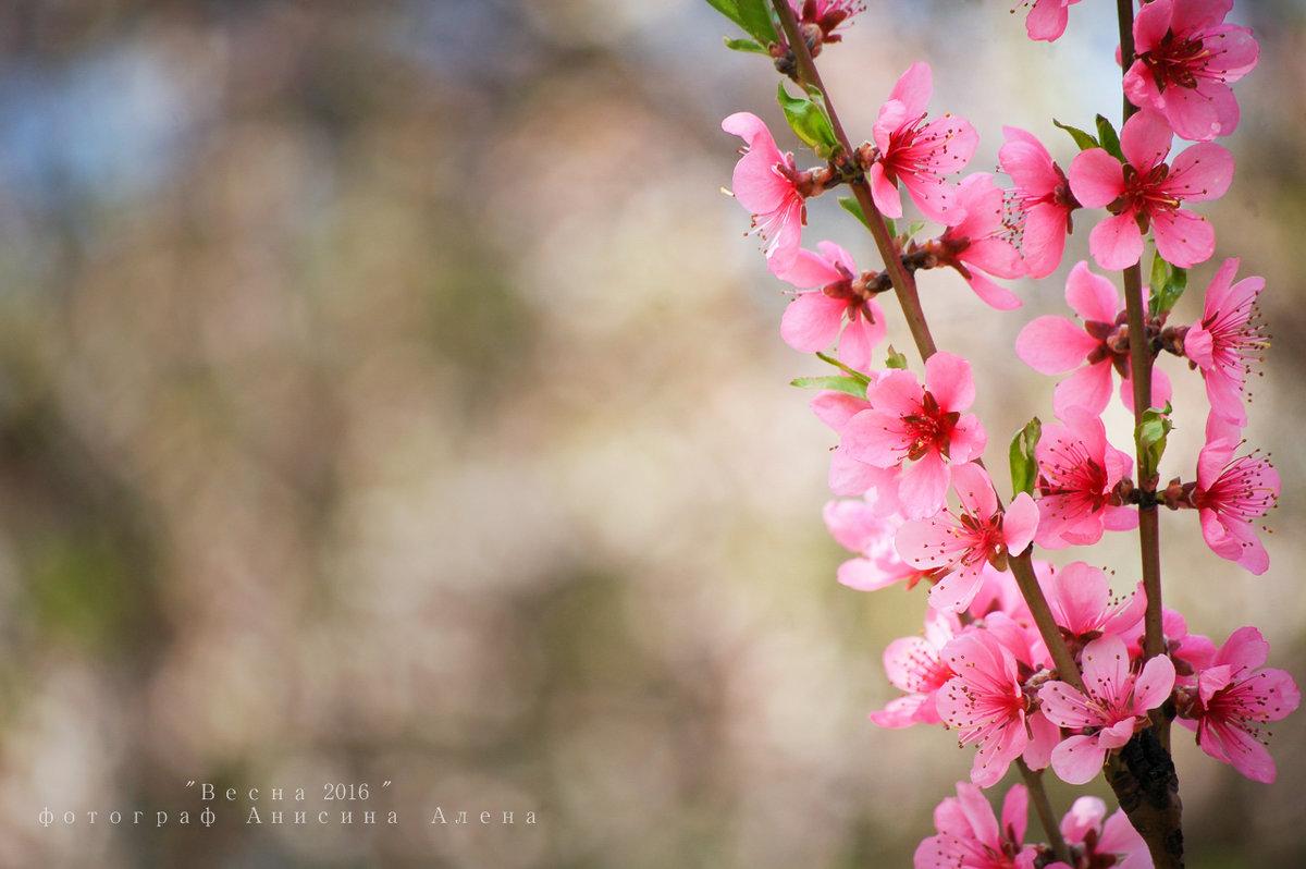 Нежное персиковое - Аl Anis