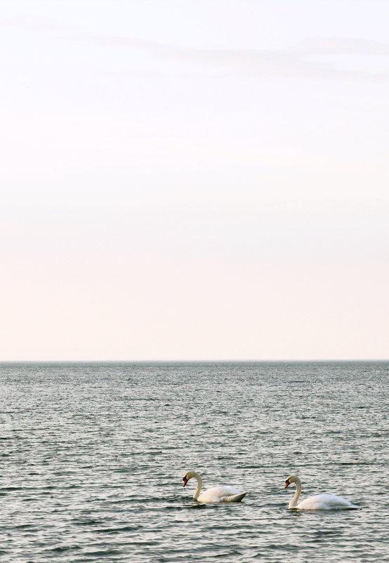 Лебединная песня - Михаил Новиков