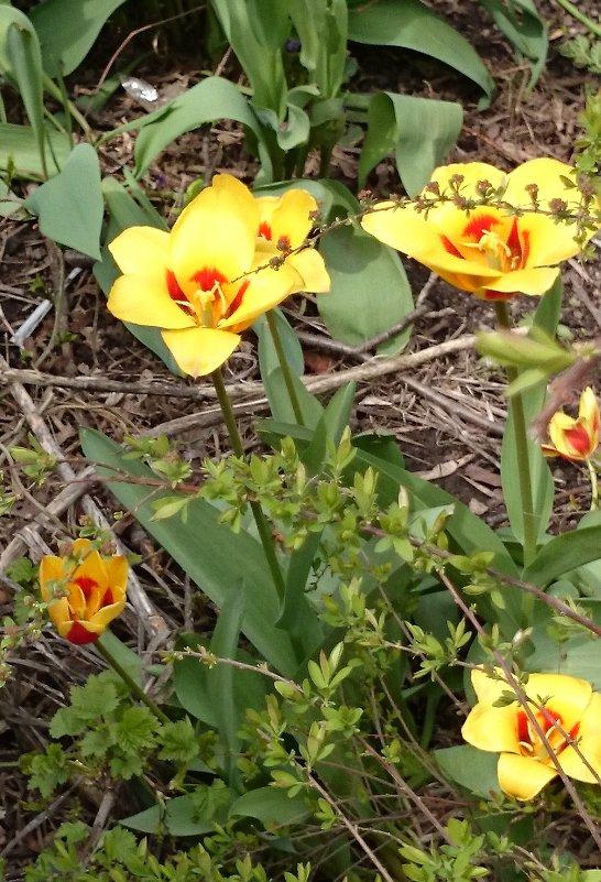 Весна идёт! - Galina194701