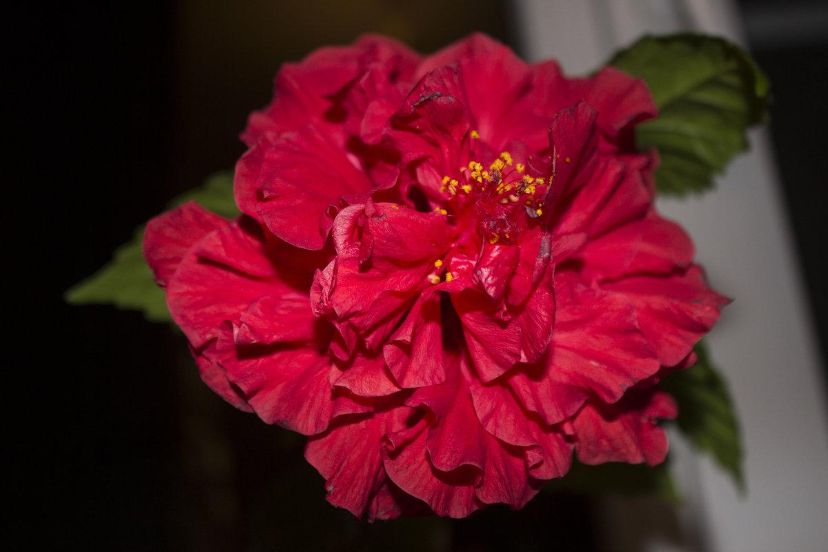 роза - олег мысак