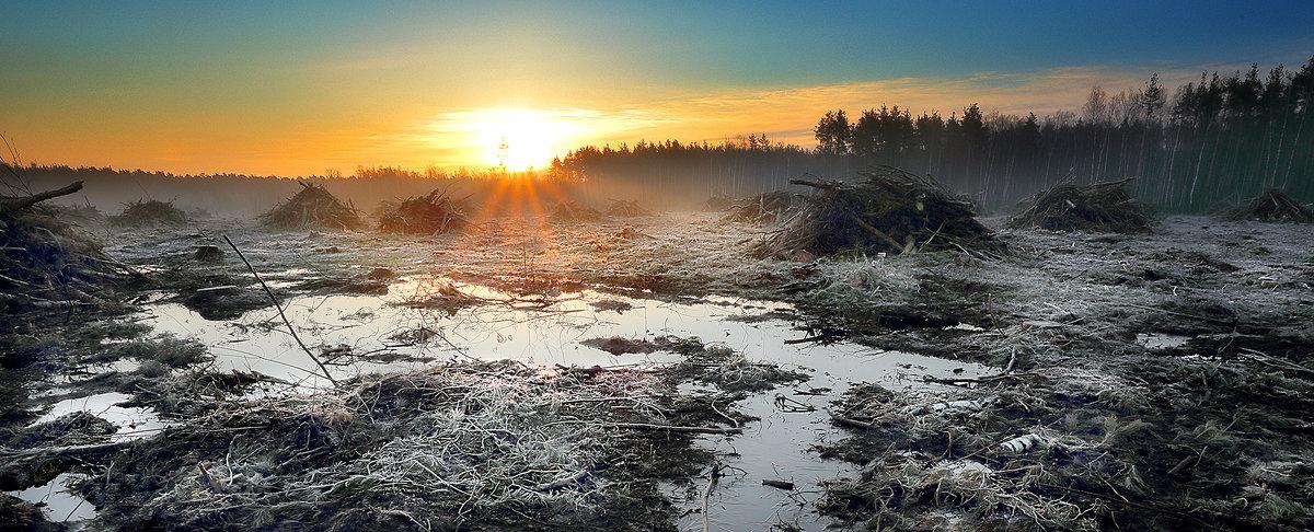 Рассвет поверженного леса...3 - Андрей Войцехов