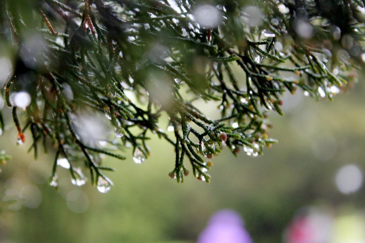 майский дождь в городе - elena manas