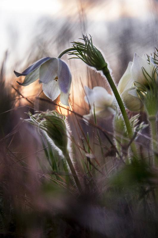 Ловец снов - Татьяна Степанова