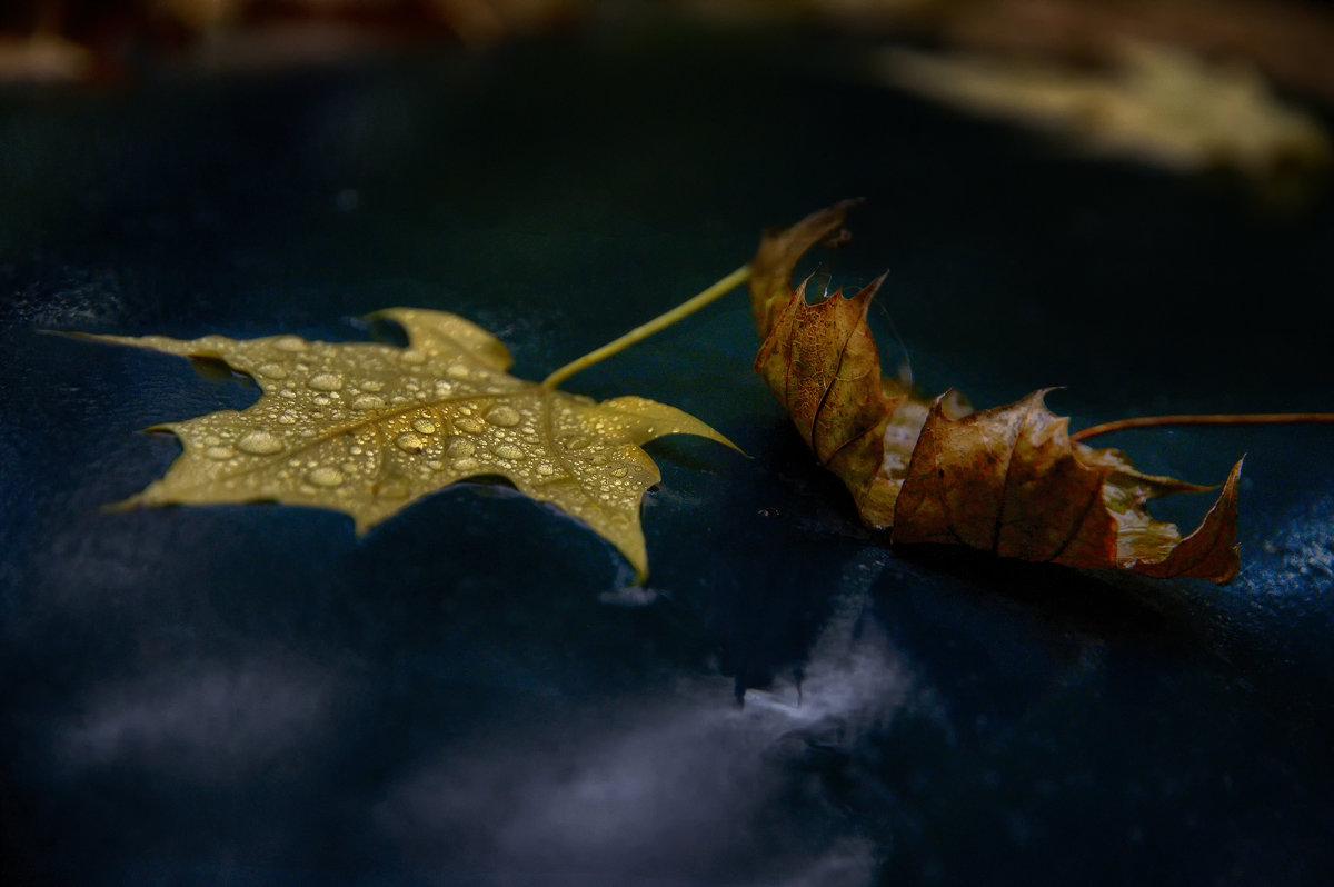 Осень - Vladislav