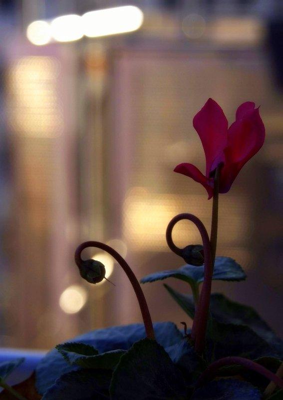 Jazztime...... - Lilly