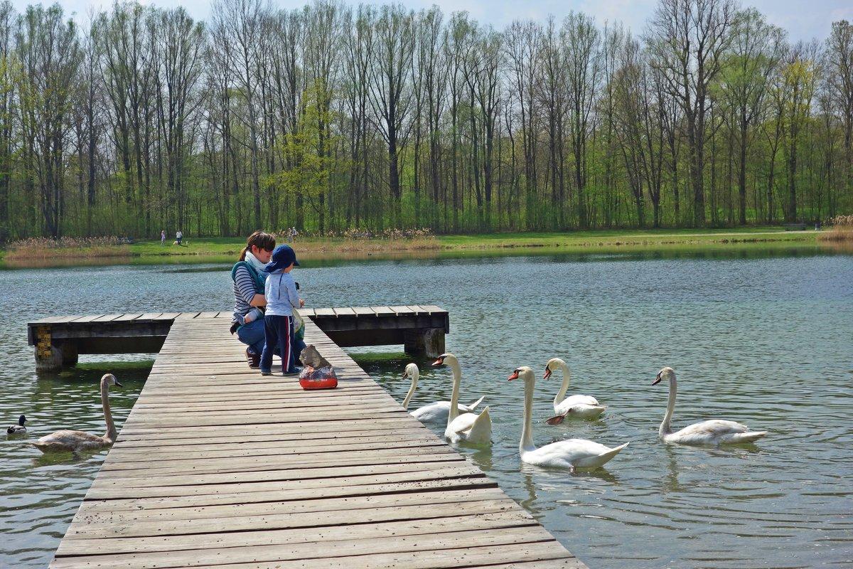 Детки любят кормить лебедей... - Galina Dzubina
