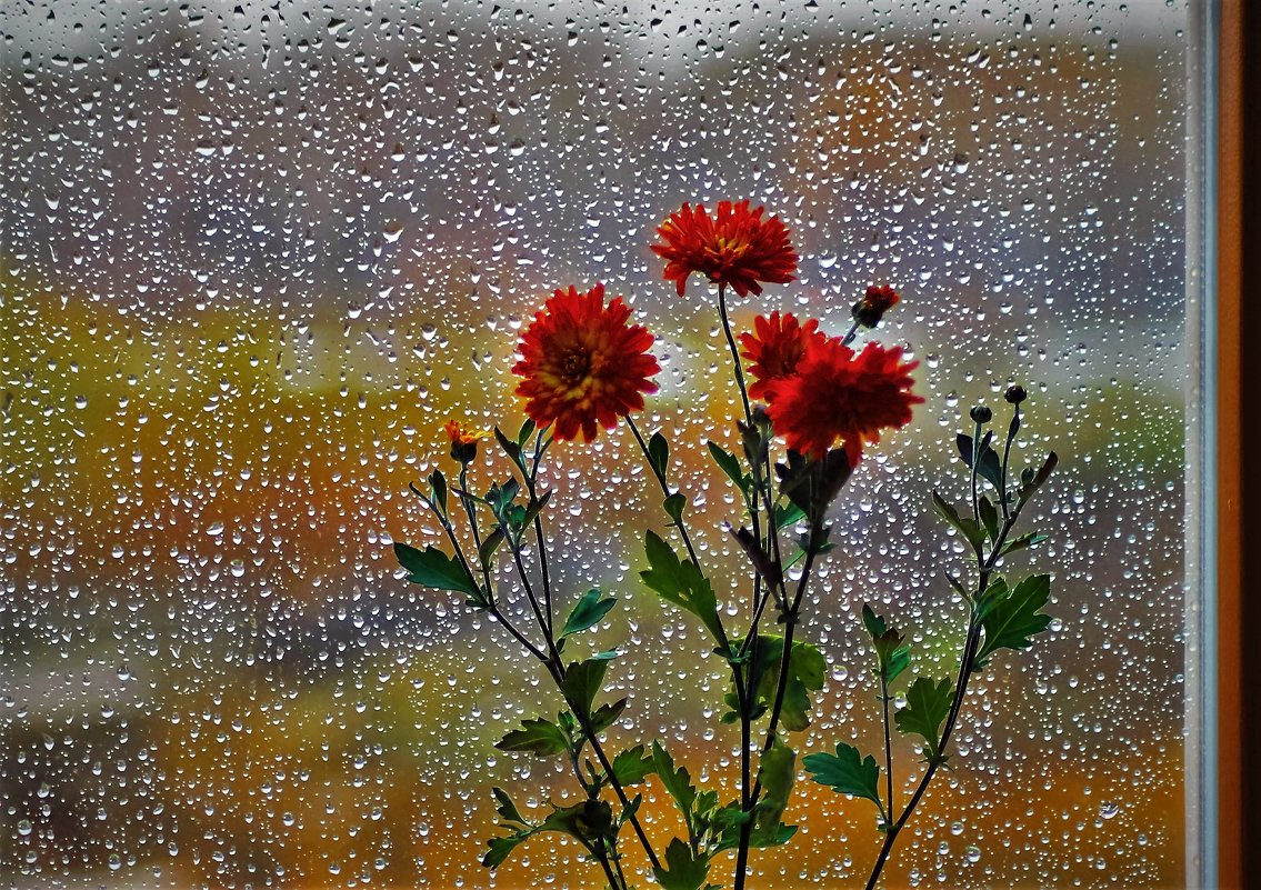 Плачет дождик за окном - Сергей Чиняев