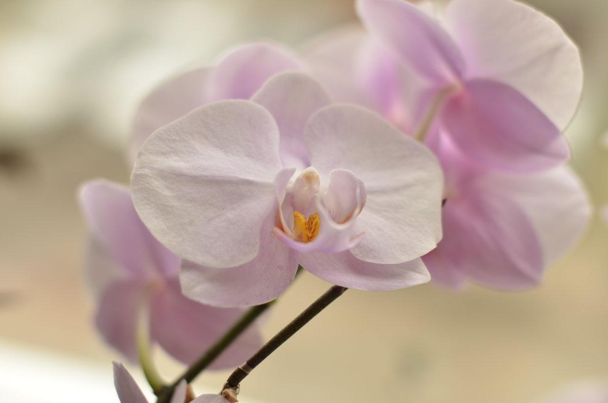 орхидея - Михаил Радин