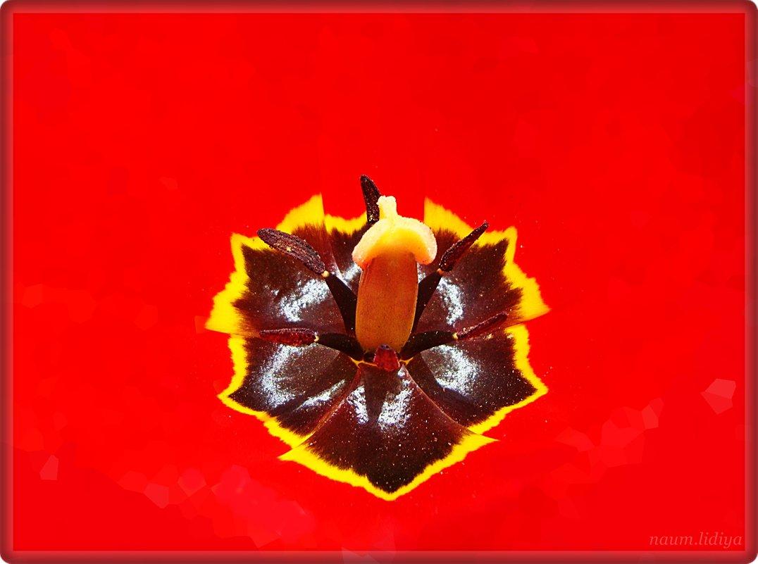 В сердце тюльпана - Лидия (naum.lidiya)