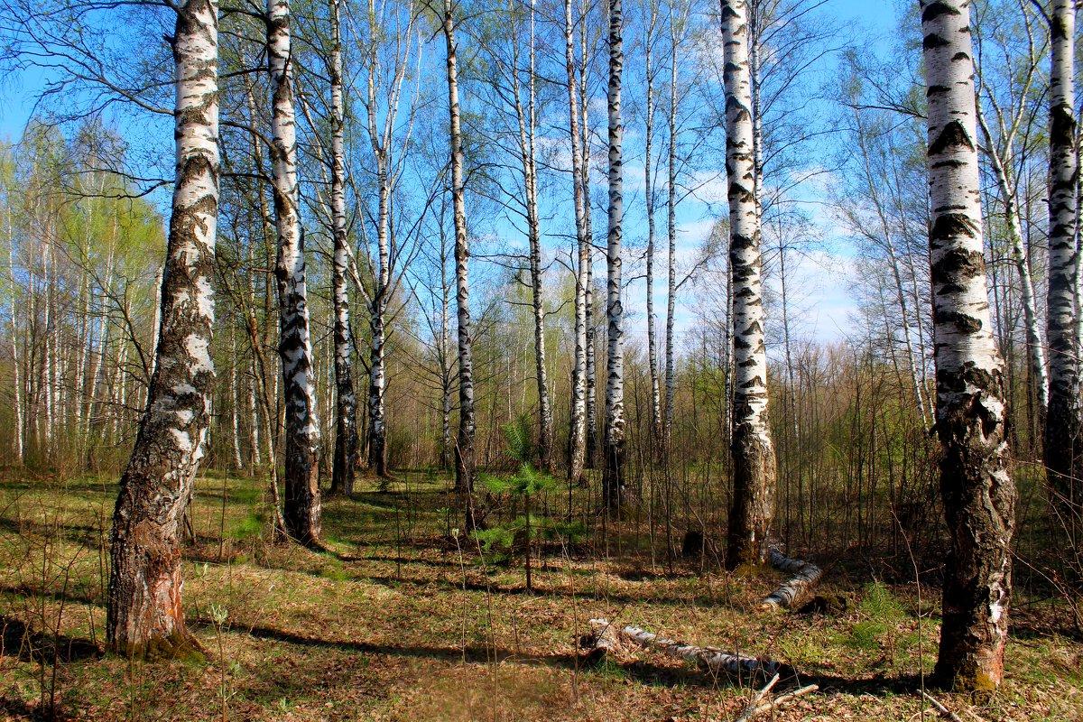 Весенний лес - Милагрос Экспосито