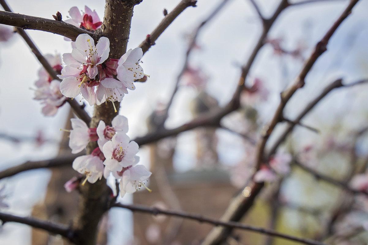 Весна - Sheri Day