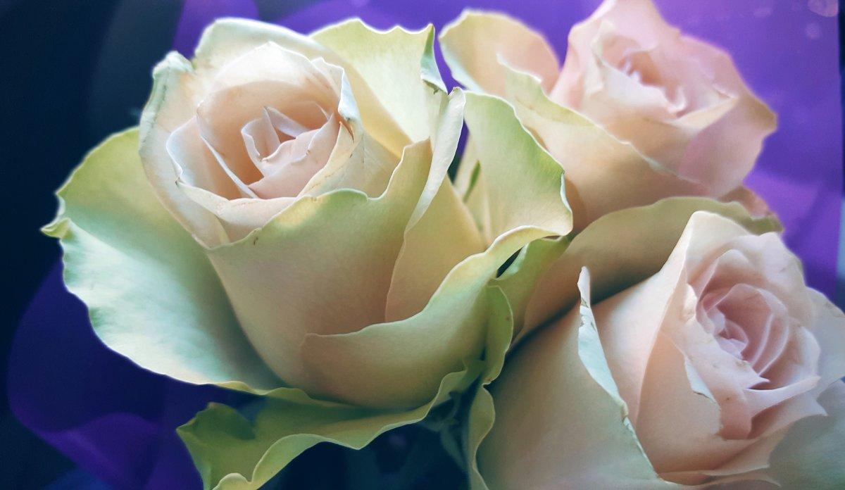 Розы  к годовщине - Ирина