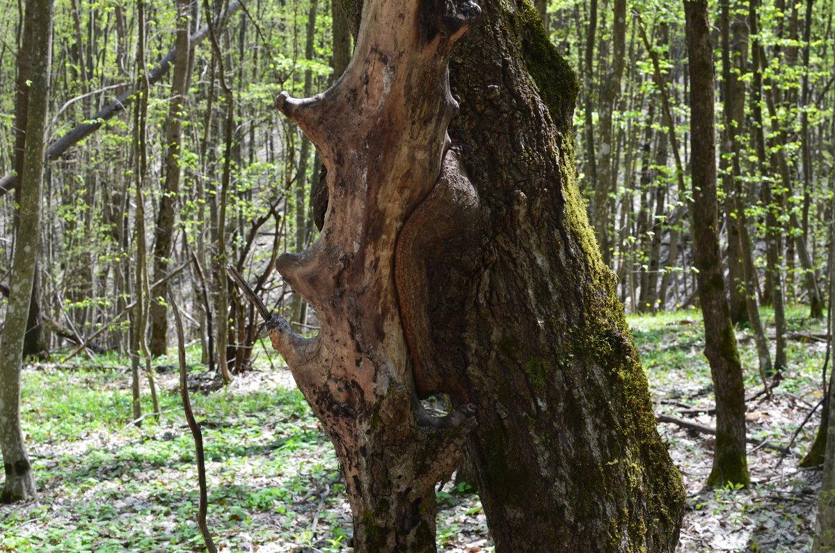 Такие у нас деревья... - Береславская Елена