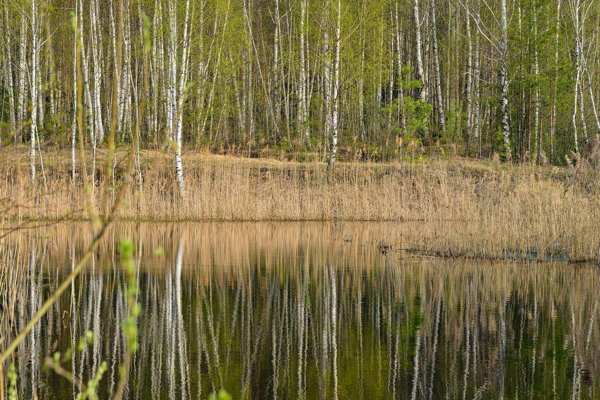 отражение - Юрий Бичеров