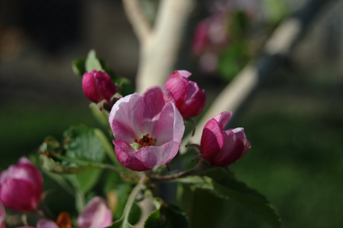 Квіти - Леонід Калащук