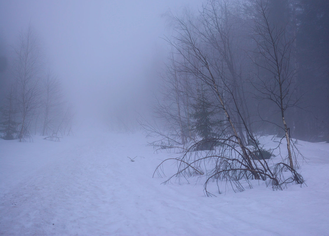 туман - Анастасия Иноземцева