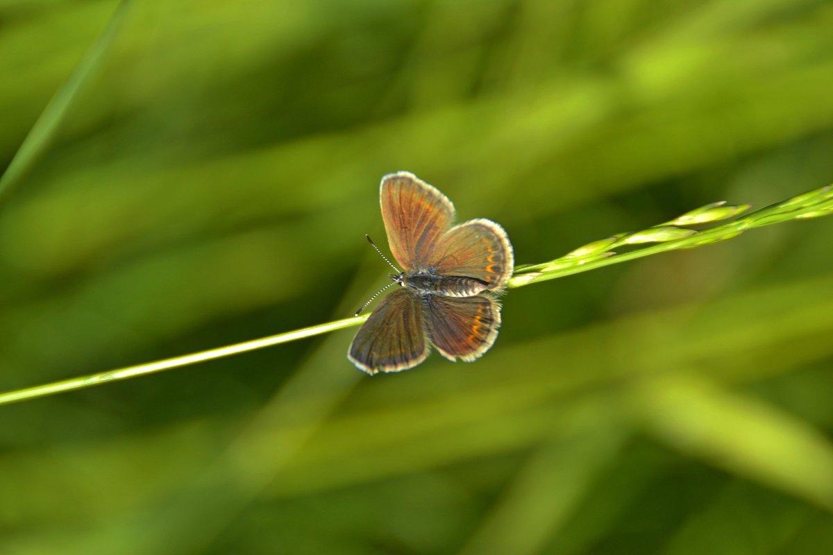 Бабочка - Алексей Могилёв