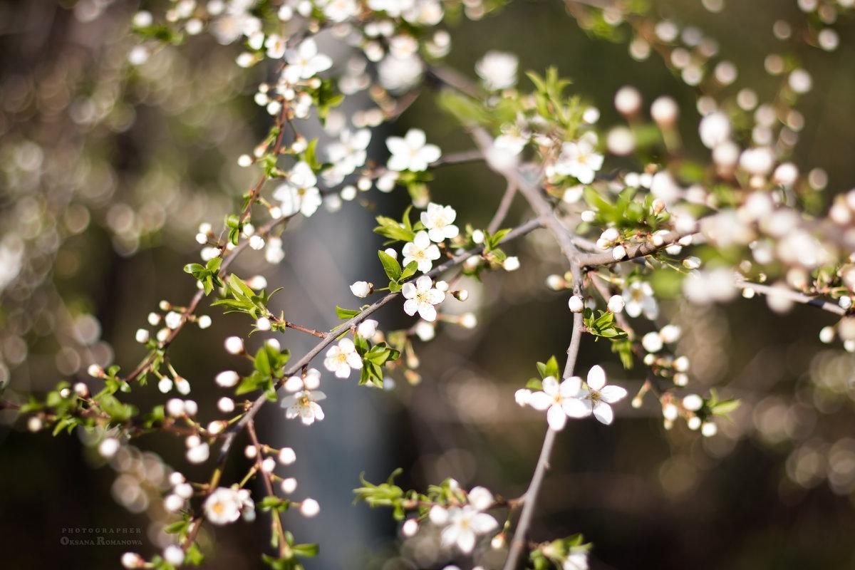 Когда цветут Вишни - Оксана Романова