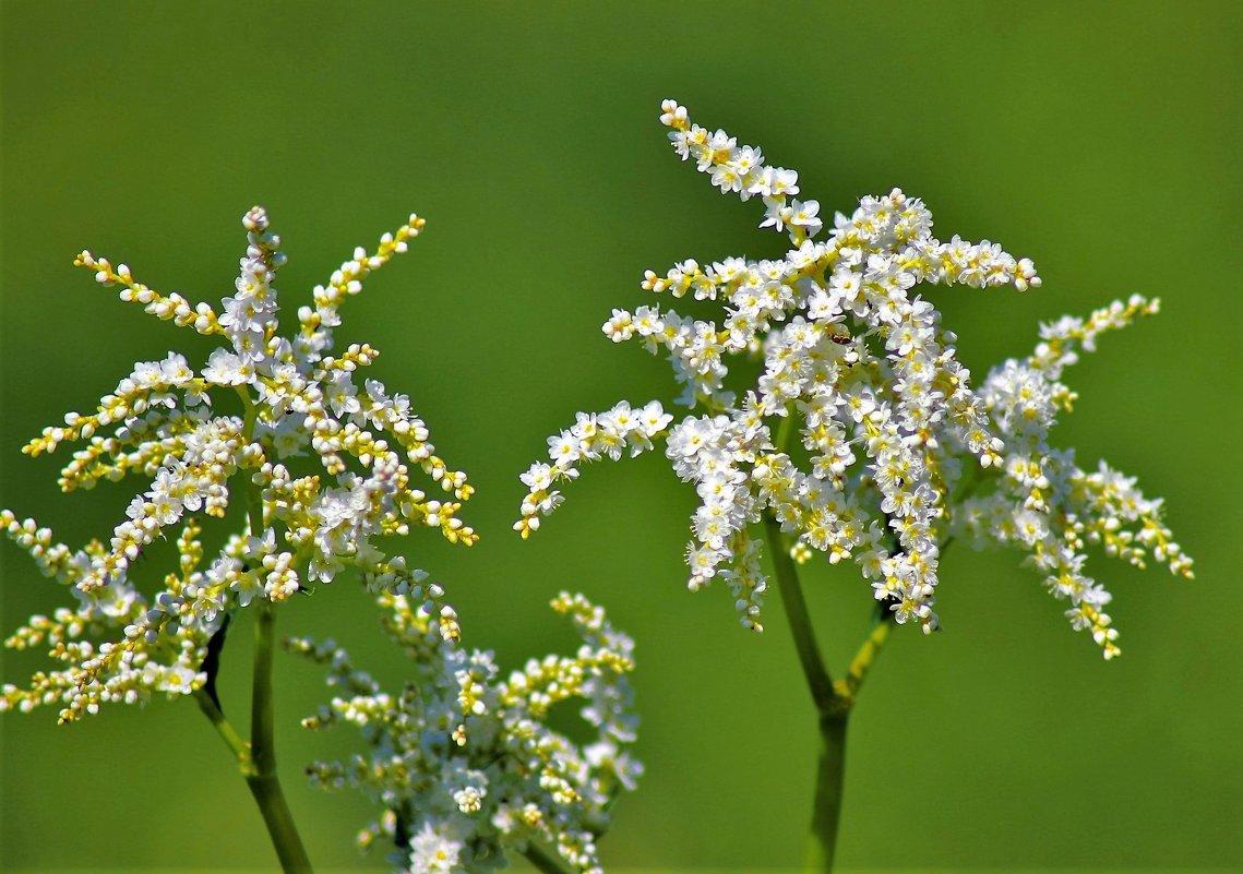 Цветы у реки - Сергей Чиняев