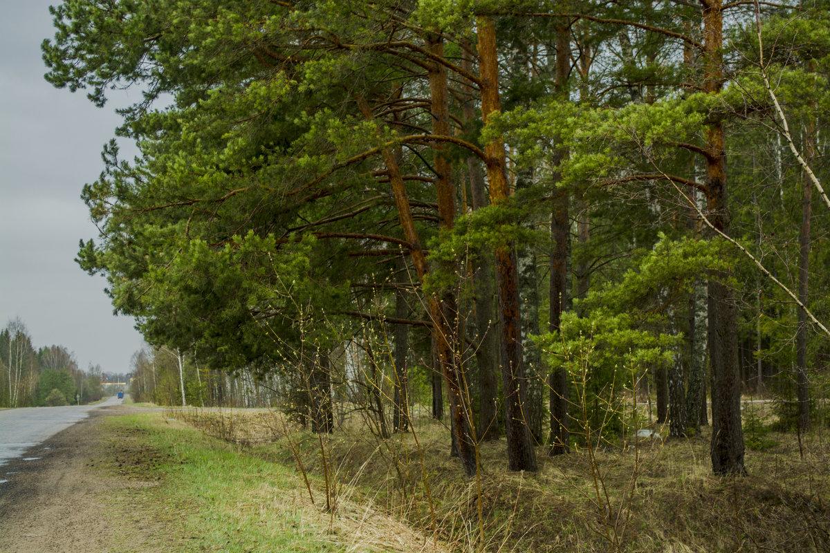 У дороги - Юрий